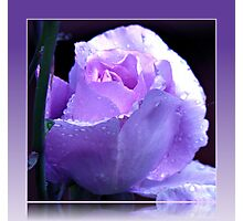 Dreamy Blue Moon Rose Beauty in Reflection Frame Photographic Print