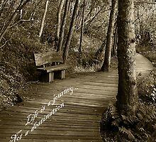 Life is a journey by Elaine Carty