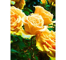 My Surreal Apricot Roses Photographic Print