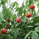 Flowering Tree by AuntieBarbie