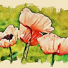 Pink Poppies - textured by PhotosByHealy