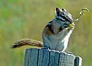 Chipmunk at Lunch by Graeme  Hyde
