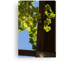 Overhead Grape Harvest - Summertime Dreaming Of Fine Wines - A Vertical View Canvas Print