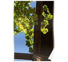 Overhead Grape Harvest - Summertime Dreaming Of Fine Wines - A Vertical View Poster