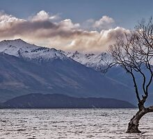 That Wanaka Tree by STEPHEN GEORGIOU PHOTOGRAPHY