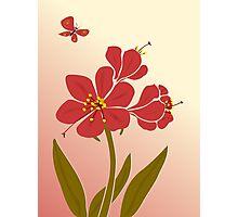 Amaryllis Flowers Photographic Print