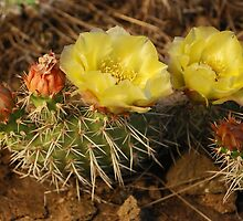 Prickly Pear Cactus by Eivor Kuchta