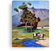 TWO COWS NSW Canvas Print