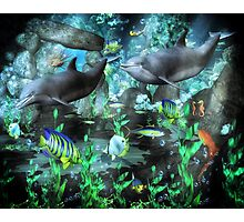 Dolphin's Under The Sea   Photographic Print