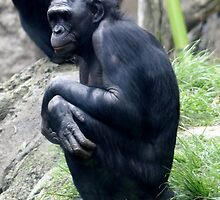 Chimp by MitchellAndrew