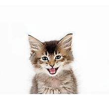 Cute Tabby kitten laughing Photographic Print