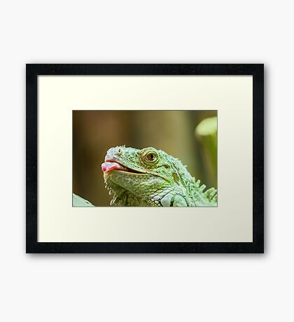 Green Iguana Reptile Portrait On Tree Branch Framed Print