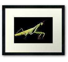 holy mantis Framed Print