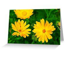 Flowers 10 Greeting Card