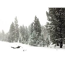 Snowstorm at Washoe Meadows State Park Photographic Print
