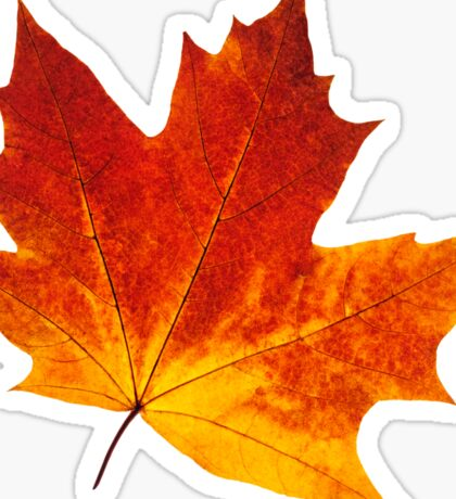 Autumn maple leaf Sticker
