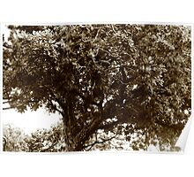 Cradled Branches Poster