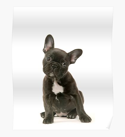 Cute French Bulldog Puppy Poster