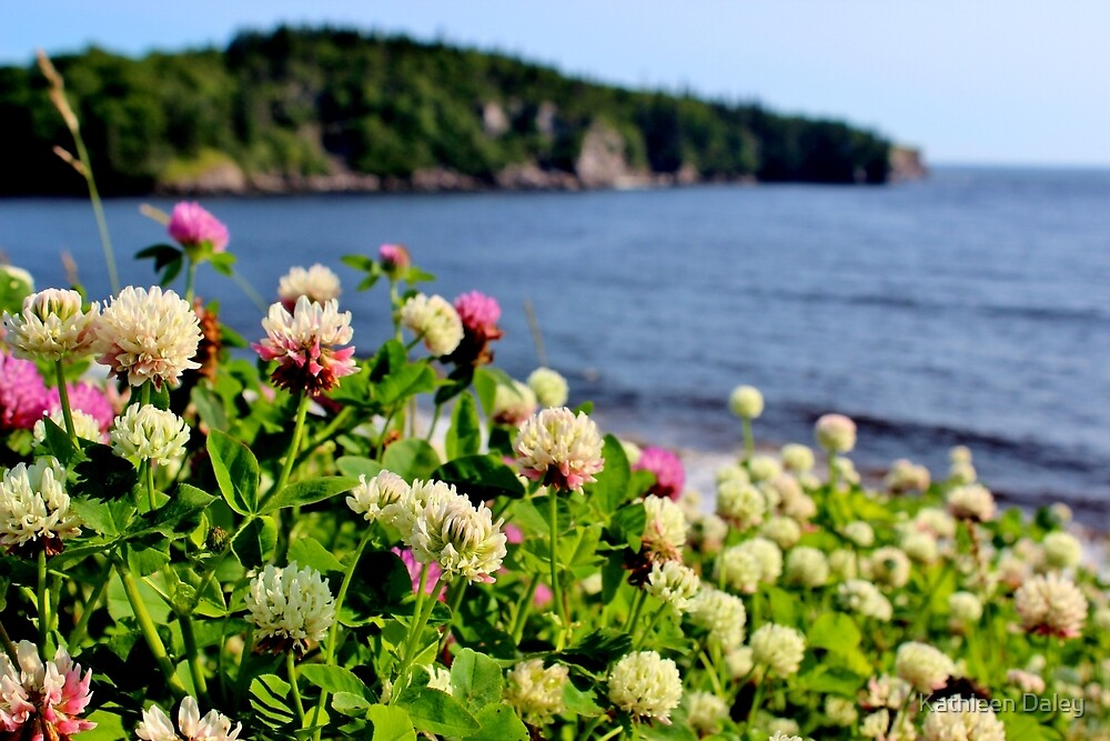Clover on the Cliff by Kathleen Daley