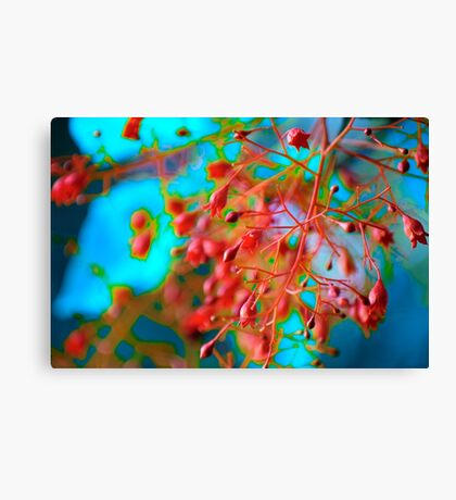 Fiery Red Clusters ~ Illawarra Flame Tree  Canvas Print
