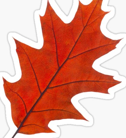 Red autumn leaf Sticker