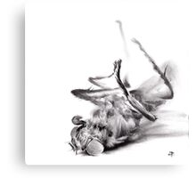 little things too, senescence II - charcoal drawing Canvas Print
