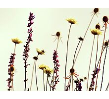wildflowers on white Photographic Print