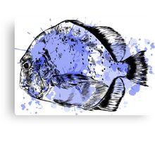 Watercolor fish. Canvas Print