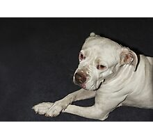 I Am  a Peaceful Pit Bull ♥ Photographic Print