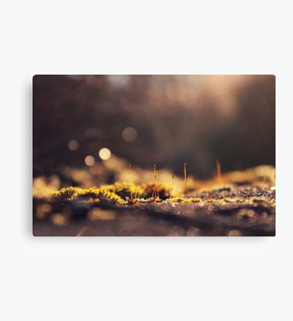 Flowers nature Canvas Print