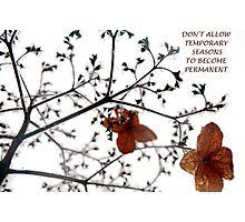 Temporary Seasons Photographic Print