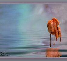Flamingo by Richard Gaffney