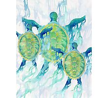 Three Turtles Photographic Print