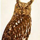 Blinking Owl by Antonio Arcos aka fotonstudio