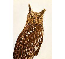 Blinking Owl Photographic Print