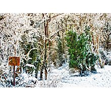 Woodland Snow Photographic Print