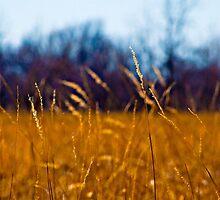 Tall Grass in Kansas by JMartinez