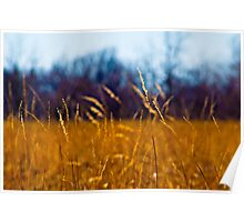 Tall Grass in Kansas Poster