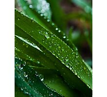 Blade of Dewy Grass Photographic Print