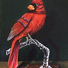Cardinal Painting by careball