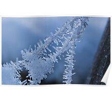 Ice Crystals on Web Poster