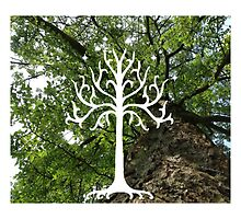 White Tree of Gondor by Erin Ryan