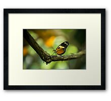 The Orange Butterfly - Wildlife Photo Framed Print