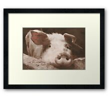 Who's Porky Framed Print