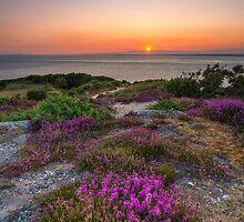 Purple Heather Sunset by manateevoyager