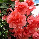 Irish Flowers #1 by Shulie1