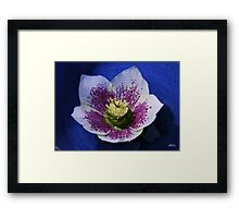Hellebore Flower Head Framed Print