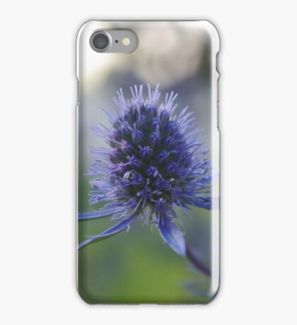 Eryngium iPhone Case/Skin