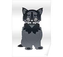 Cat In Black Poster