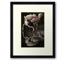 More Flamingos Framed Print